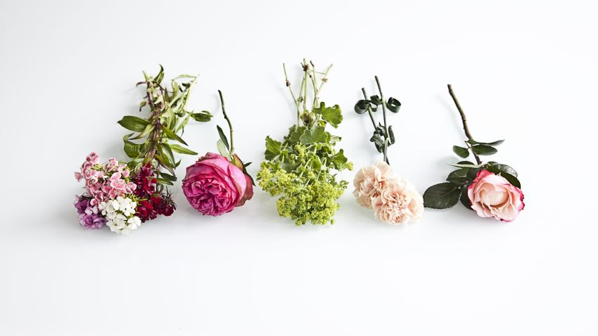 λουλούδια flower