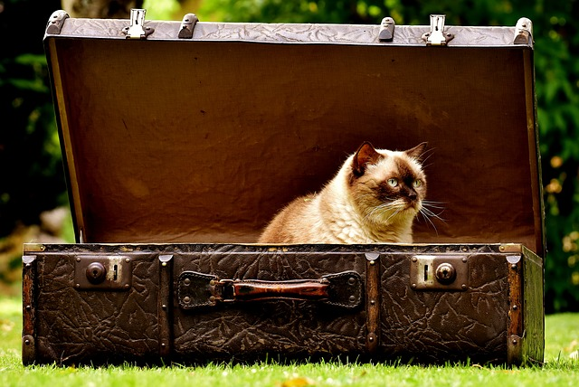 διακόσμηση gand γάτα